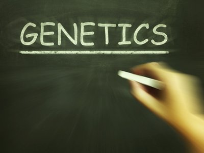 Rejecting a Donor Based on Genetic Carrier Status